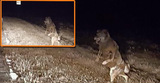 bray road beast wisconsin werewolf