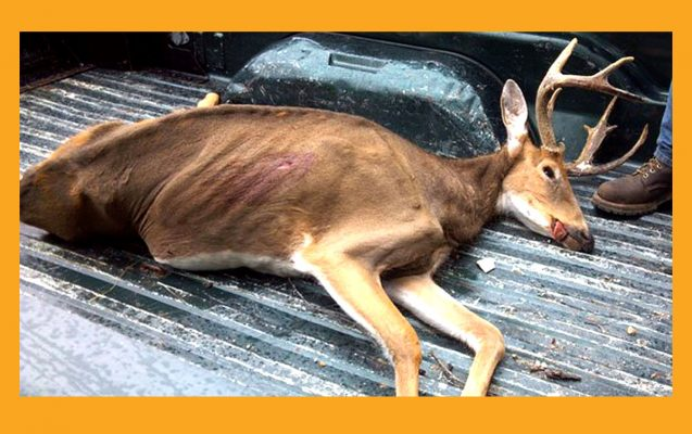 chronic wasting disease wisconsin